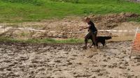 Hard Dog Race Base 2020